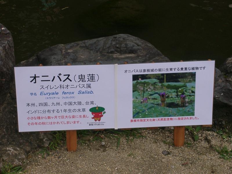 市役所前 (4).JPG