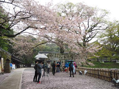 20180407_Castle_Hikone_010_s.jpg