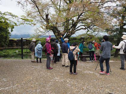20180407_Castle_Hikone_035_s.jpg