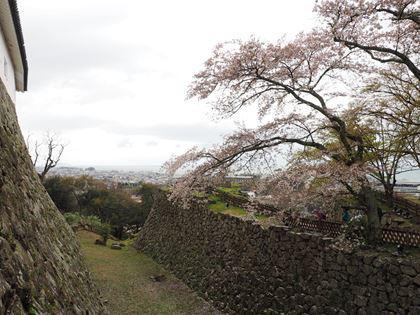 20180407_Castle_Hikone_056_s.jpg