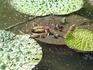 20090906_onibas_14flower.jpg