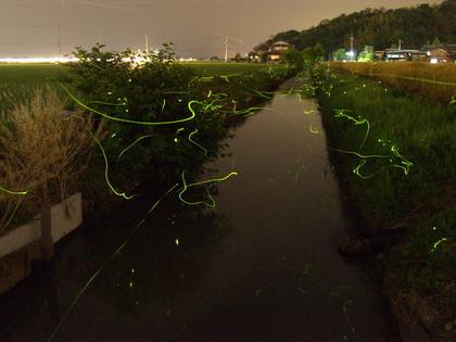 20100602_hotaru04_02.jpg