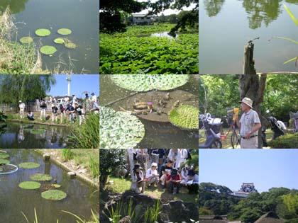 20090906_castle_hikone.jpg