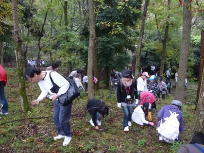 20111106_kojin04_donguri.jpg