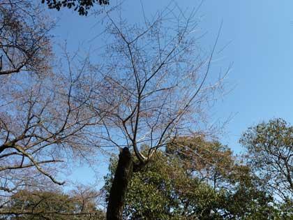 20120408_castle_hikone_05_1.jpg