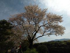 20140412_castle_058_s.jpg