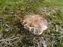 20120923_sonenuma_mushroom01.jpg