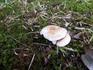 20120923_sonenuma_mushroom04.jpg